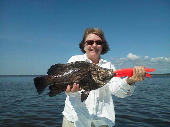 Seahawk Inshore Fishing Report 6 9 13 Summertime Inshore
